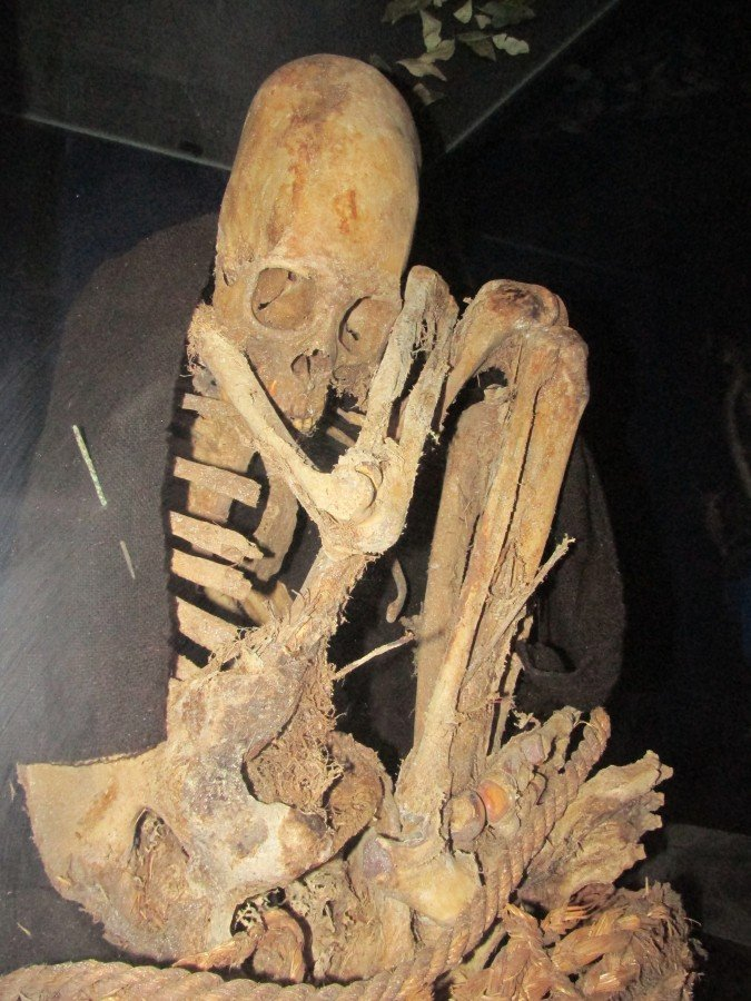 elongated skulls bolivia, paraca skulls, paraca elongated skulls, skull deformation bolivia, bolivia elongated skull discovery