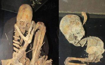 elongated skulls bolivia, paraca skulls, paraca elongated skulls, skull deformation peru, peru elongated skull discovery
