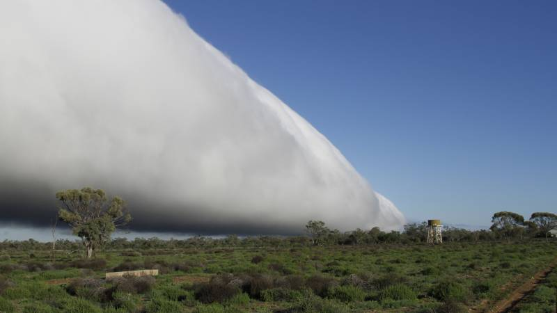 morning glory cloud queensland, morning glory cloud queensland july 2016, morning glory cloud queensland july 2016 picture, morning glory cloud queensland 2016 video, morning glory queensland july 2016