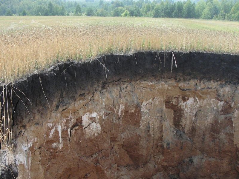 sinkhole wheat field russia, giant sinkhole field russia, russia sinkhole field, wild boar sinkhole russia field