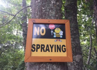 Millions of bees dead after sprays for Zika mosquitoes
