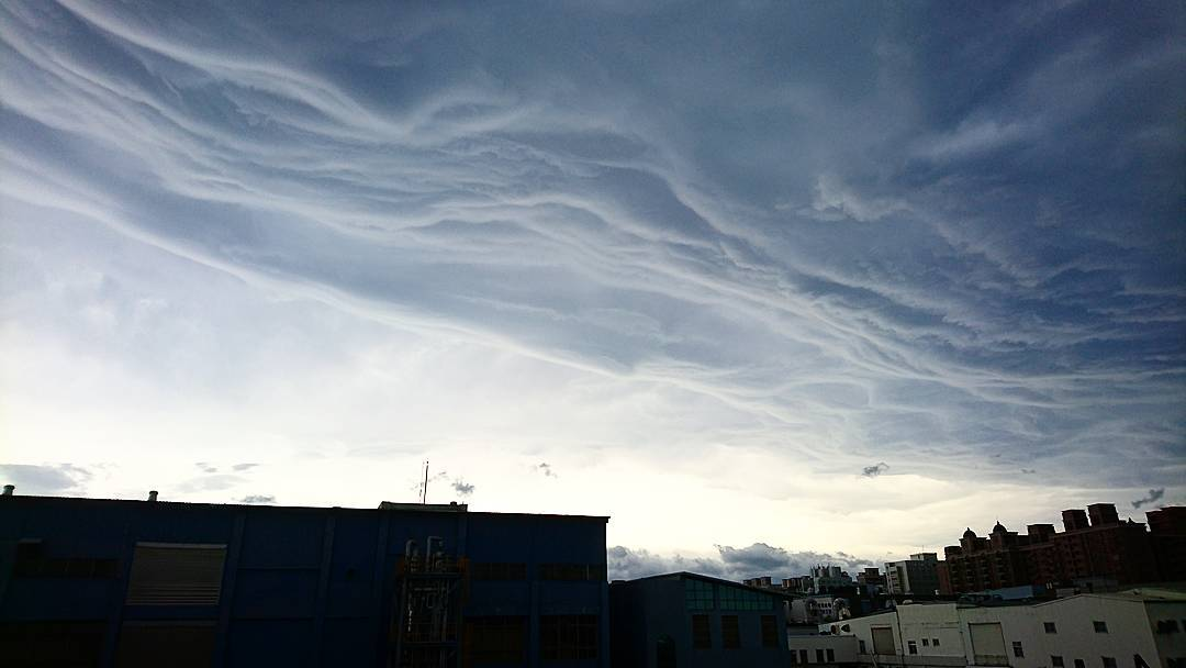 asperatus, meranti, asperatus meranti, asperatus undulatus meranti, asperatus meranti super typhoon
