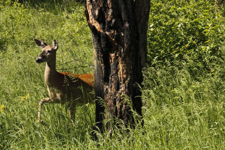 deer die-off, mass die-off, animal die-off, mysterious animal die-off, animal mass die-off
