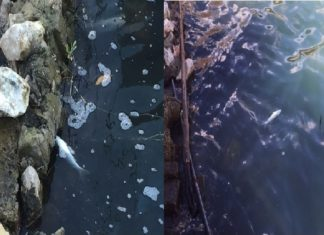 lake averno fish die-off, hydrogen sulfide kills hundreds of fish lake averno, lake averno fish kill january 2017, next big eruption, hydrogen sulfide kills fish in lake averno january 2017, Hundreds of dead fish were found along the hores of Lake Averno in the volcanic filed of Campi Flegrei. Next eruption?