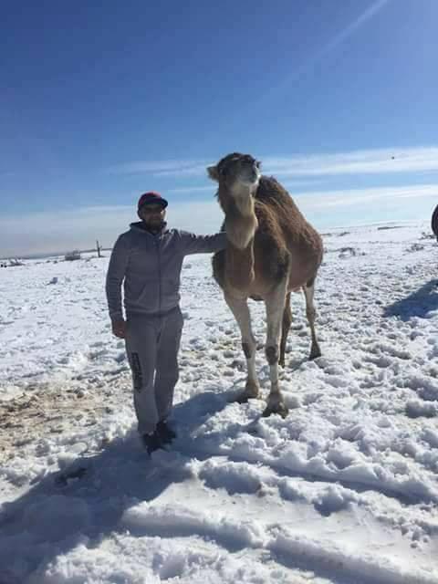 neige Algérie, neige Algérie, neige Algérie 2017, la neige recouvre le désert 2017, la neige anormale Algérie dersert 2017