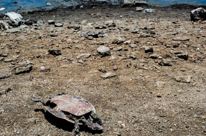 brazil turtle cemetery, turtle die-off, mass die-off, brazil turtle mass die-off, 400 dead turtles brazil