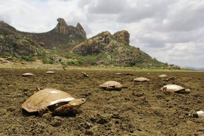 brazil turtle cemetery, turtle die-off, mass die-off, brazil turtle mass die-off, 400 dead turtles brazil