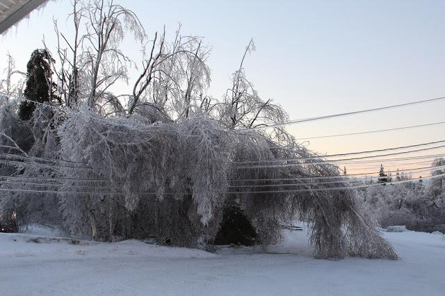 ice storm paralyses New Brunswick Canada, ice storm New Brunswick Canada january 2017, ice storm New Brunswick Canada january 2017 pictures, ice storm New Brunswick Canada january 2017 videos