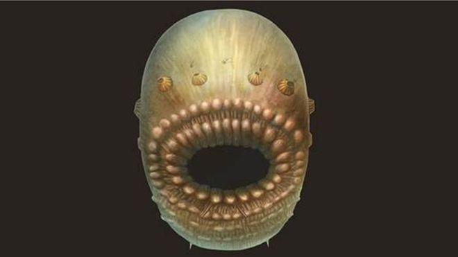 oldest human ancestor, evolution, what is the oldest human ancestor