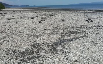 costa rica fish mass de-off, thousands of fish dead in costarica, Miles de peces aparecen muertos en playas del Golfo de Nicoya, Autoridades investigan muerte de peces en el golfo de Nicoya