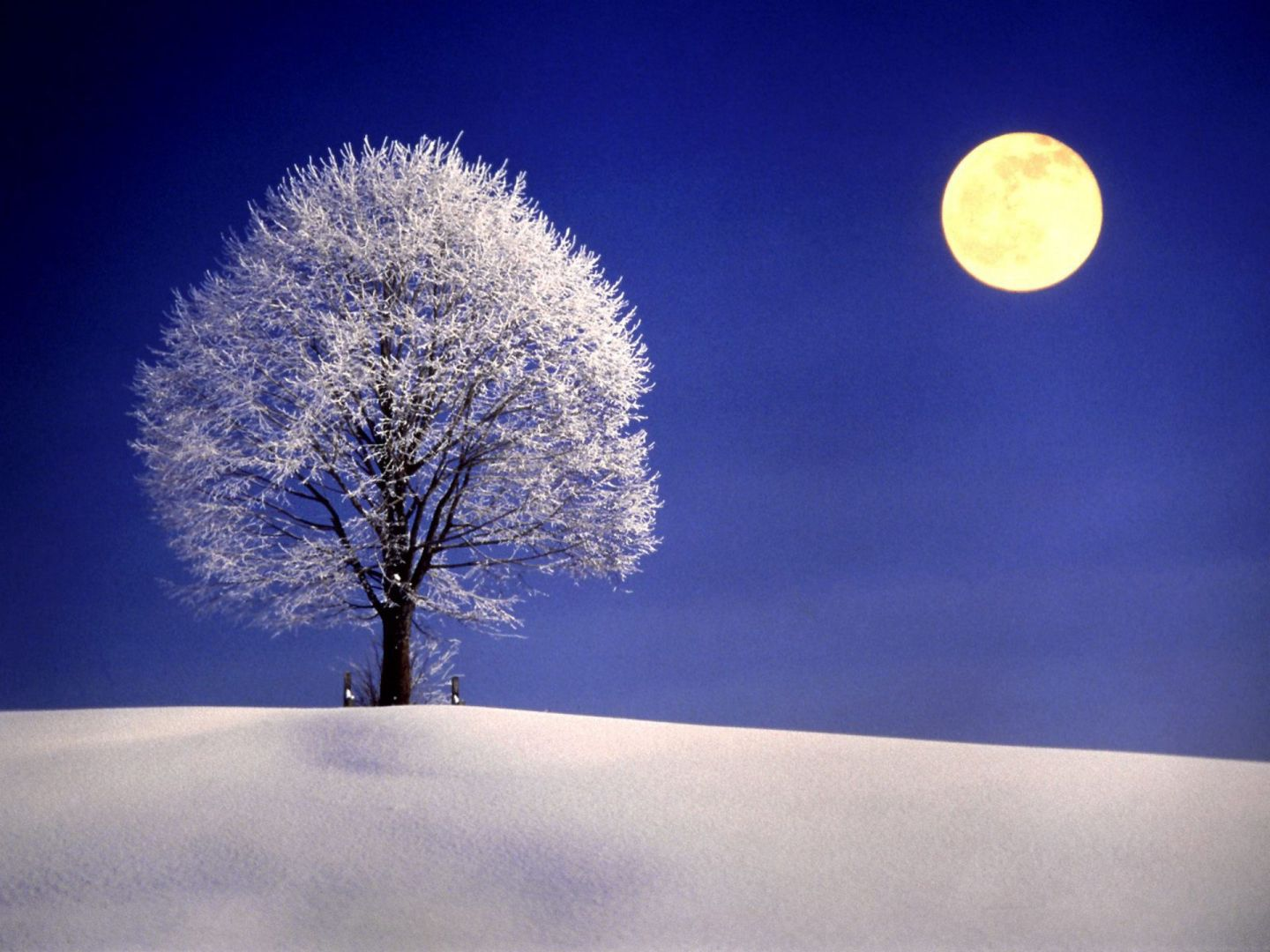 full snow moon february, The full moon of February is also known as the Full 'snow' moon or the 'Hunger' Moon. 'snow' moon