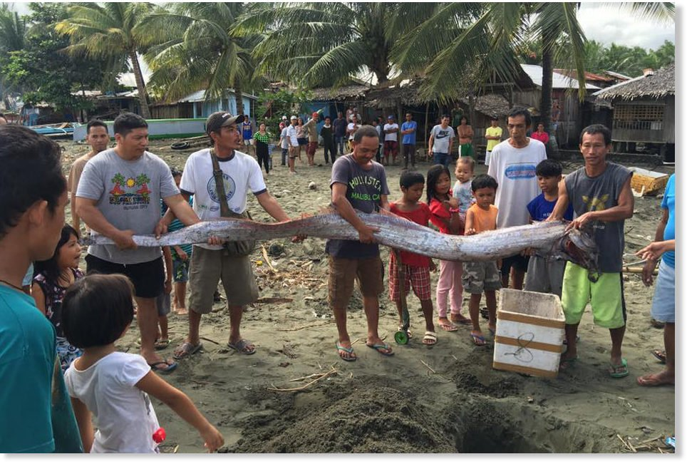 oarfish, oarfish philippines earthquake, oarfish philippines earthquake february 2017, oarfish washes up before philippines earthquake february 2017 pictures