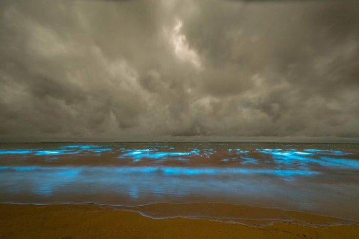 bioluminescence, bioluminescence tasmania, bioluminescence tasmania march 2017, bioluminescence tasmania pictures, bioluminescence tasmania march 2017 pictures