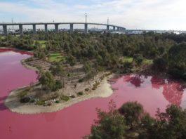 pink lake melbourne australia, Lake turns bright pink in Melbourne, Australia, lake turns pink in melbourne overnight