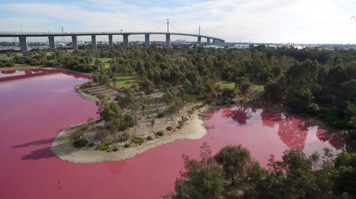 pink lake melbourne australia, Lake turns bright pink in Melbourne, Australia, lake turns pink in melbourne overnight