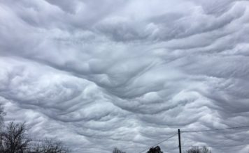 undulatus asperatus kentucky, undulatus asperatus kentucky video, undulatus asperatus kentucky march 2017 video, undulatus asperatus kentucky march 2017 picture, undulatus asperatus kentucky picture and video march 2017