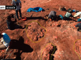 dinosaur eggs embryos discovered argentina, dinosaur eggs embryos discovered argentina video, dinosaur eggs embryos discovered argentina photo, dinosaur eggs with embryos inside unearthed in Argentina,