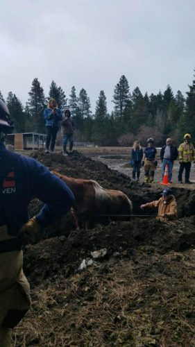 horse sinkhole washington state, horse falls sinkhole washington state, ground collapses under horse, sinkhole swallows horse video