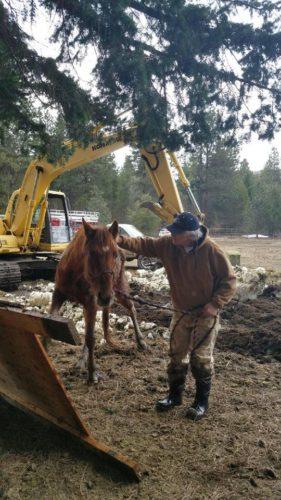 horse sinkhole washington state, horse falls sinkhole washington state, ground collapses under horse, sinkhole swallows horse video
