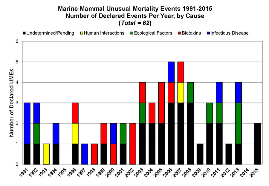 humpback whale mysterious and unusual deaths us atlantic coast, Mysterious spike in humpback whale deaths on US Atlantic Coast, video, Mysterious spike in humpback whale deaths on Atlantic Coast picture, unusual Mysterious spike in humpback whale deaths on Atlantic Coast, humpback whale die-off
