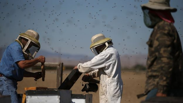 First study finds neonic pesticides in US drinking water, neonic pesticides in US drinking water