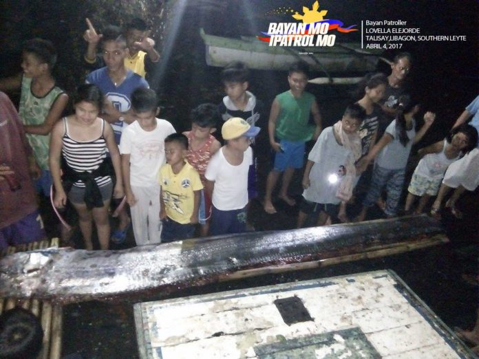 oarfish philippines april 2017, oarfish philippines april 2017 pictures, oarfish philippines april 2017 image, oarfish philippines april 2017 video