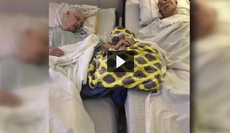 couple dies holding hands, After nearly 62 years of marriage, Lake Jackson couple Tom and Delma Ledbetter left this world about two weeks ago, couple dies together while holding hands