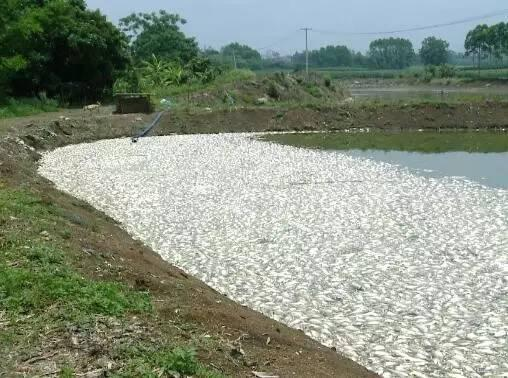 fish die off china