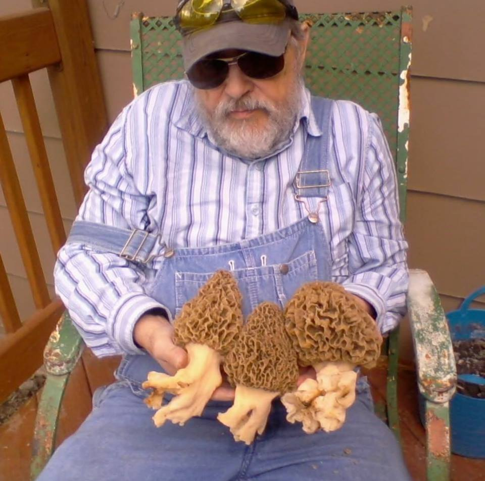giant morels southern Iowa., giant morels southern Iowa. photo, giant morels southern Iowa. picture, giant morels southern Iowa. video