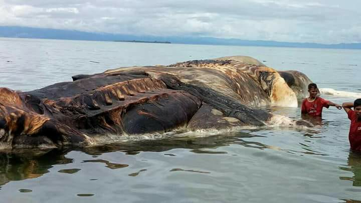 mysterious sea creature indonesia, mysterious sea creature indonesia video, mysterious sea creature indonesia picture, mysterious sea creature indonesia may 2017