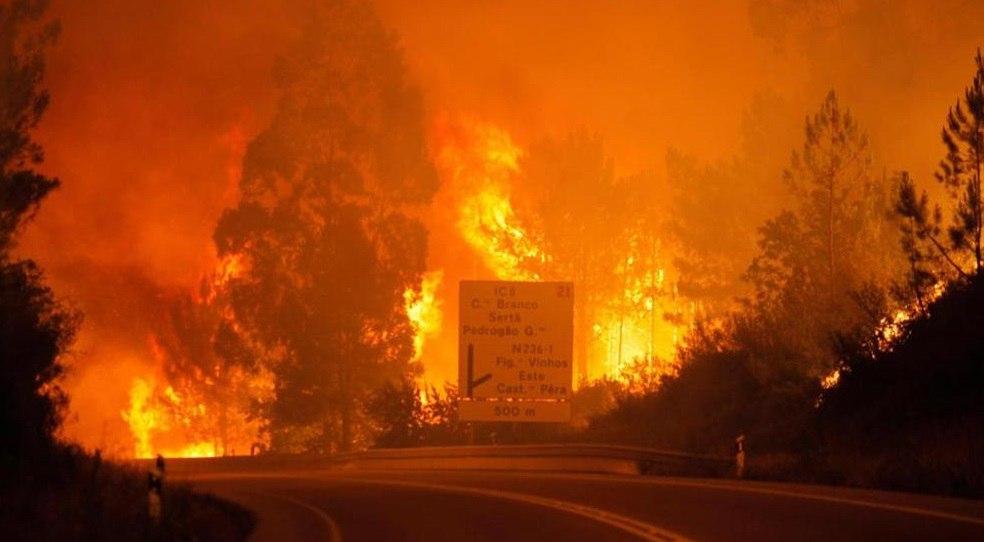 portugal fire, portugal fire june 2017, fire kills 62 people in Portugal portugal wildfire june 2017, portugal fire video, fire kills 62 people in Portugal pictures, portugal fire video june 2017