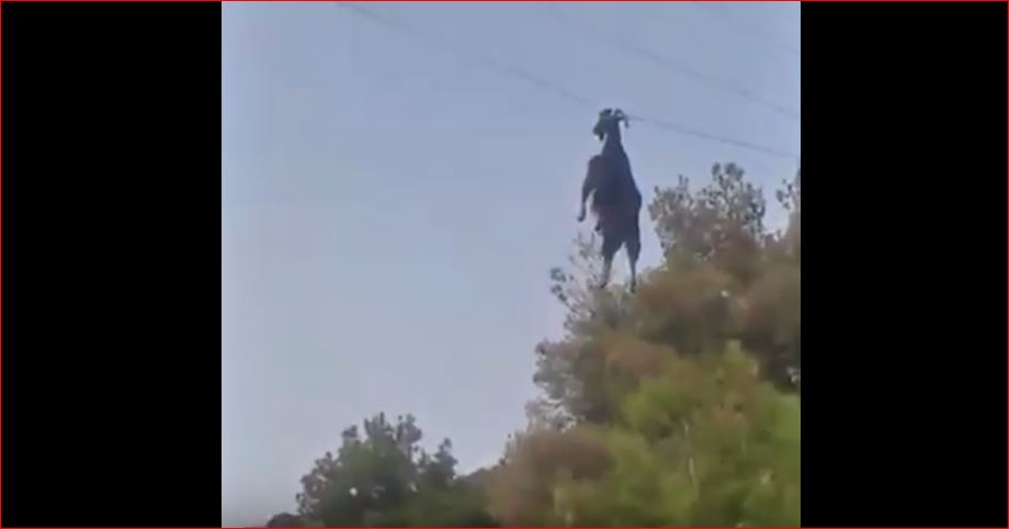 goat power cable video, goat power cable video greece, goat power cable video rescue greece