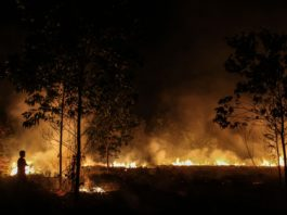 5 Indonesian provinces declare emergencies over forest fires, forest ires indonesia, state of emergency forest fires indonesia