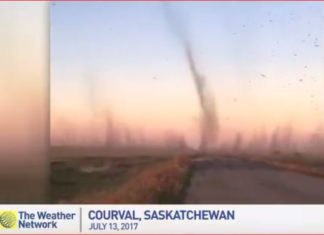 tornado fish flies canada, These fish flies swarming a field in Saskatchewan, Canada look like multiple tornadoes, fish flies tornado canada video