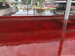 blood red water costa rica, red water cr, blood red water costa rica pictures, blood red water costa rica videos