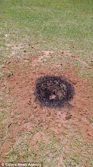 This stunned homeowner made an out of this world discovery after finding a glowing meteorite in his back garden in Appling, Georgia on July 21 2017, meteorite appling georgia 2017, meteorite appling georgia video, meteorite appling georgia pictures
