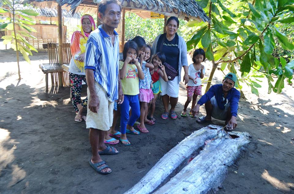 Two oarfish were ound dead just a day before the M6.3 earthquake in the Philippines on August 11 2017