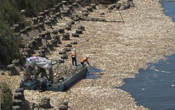 Mass fish deaths blamed on high temperatures