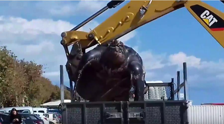 monster turtle barcelona, giant turtle barcelona, monster turtle dead beach barcelona, giant leatherback turtle dead near Barcelona
