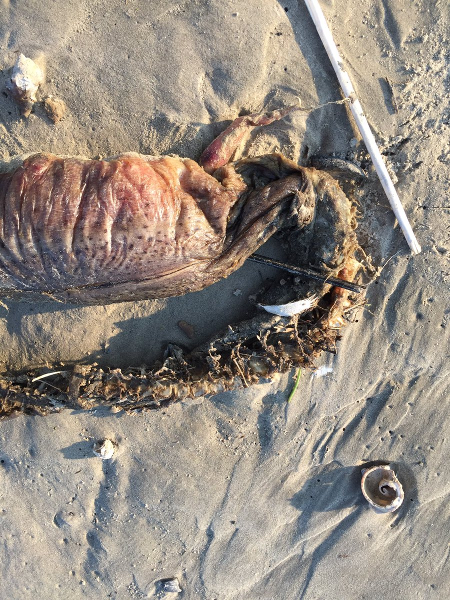 What the heck is this? Mysterious sea creature found on a ...