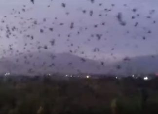huge swarm of crows flying over the city of Tursunzoda in Tajikistan, huge swarm of crows flying over the city of Tursunzoda in Tajikistan video