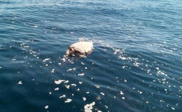 400 Dead sea turtles dound off El Salvador, Dead sea turtles dound off El Salvador on November 1 2017