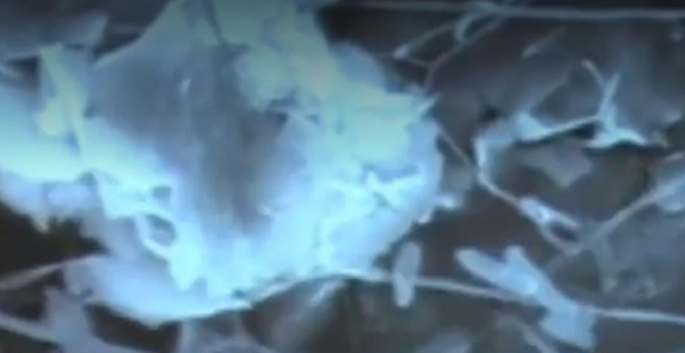 new life form discovered in Grand Canyon Caverns, new life form discovered in Grand Canyon Caverns video, new life form discovered in Grand Canyon Caverns picture