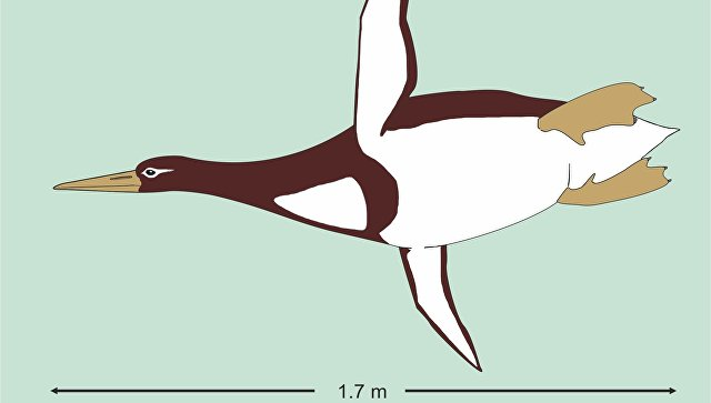 giant penguin new zealand, fossil giant penguin new zealand, giant penguin antarctica, new species giant penguin new zealand