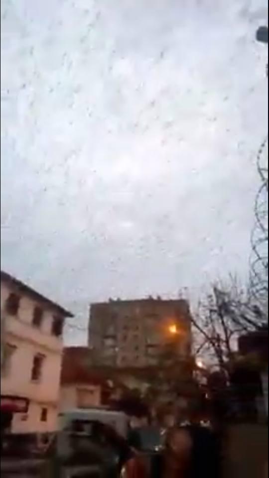 millions birds engulf algiers algeria, millions birds engulf algiers algeria video, millions birds engulf algiers pictures, millions birds engulf algiers algeria pictures and video, millions birds engulf algiers algeria december 2017