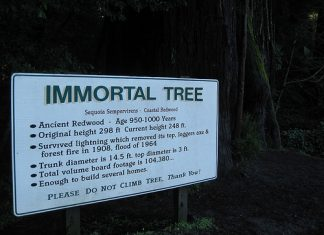 plants are immortal, immortality in plants, Plants are immortal or contain the key to immortality