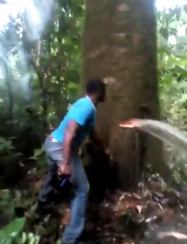 Water flows out of a tree trunk , water gushes out of tree africa, water gushes out of tree video, water flows out of tree video, water flows out of tree cameroon and india video