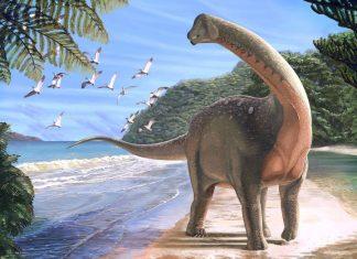 new dinosaur found in egypt solves ancient mystery, Mansourasaurus shahinae