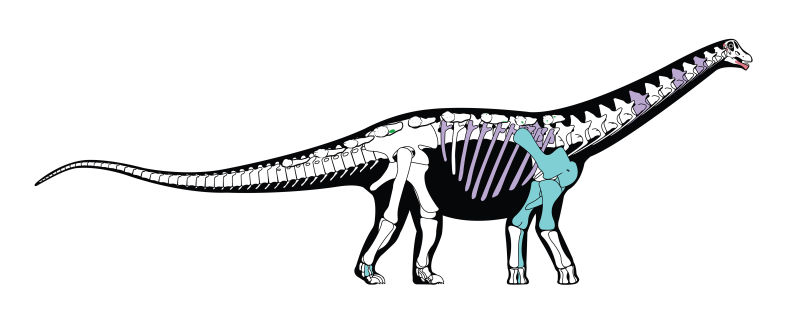 new dinosaur found in egypt solves ancient mystery, Mansourasaurus shahinae