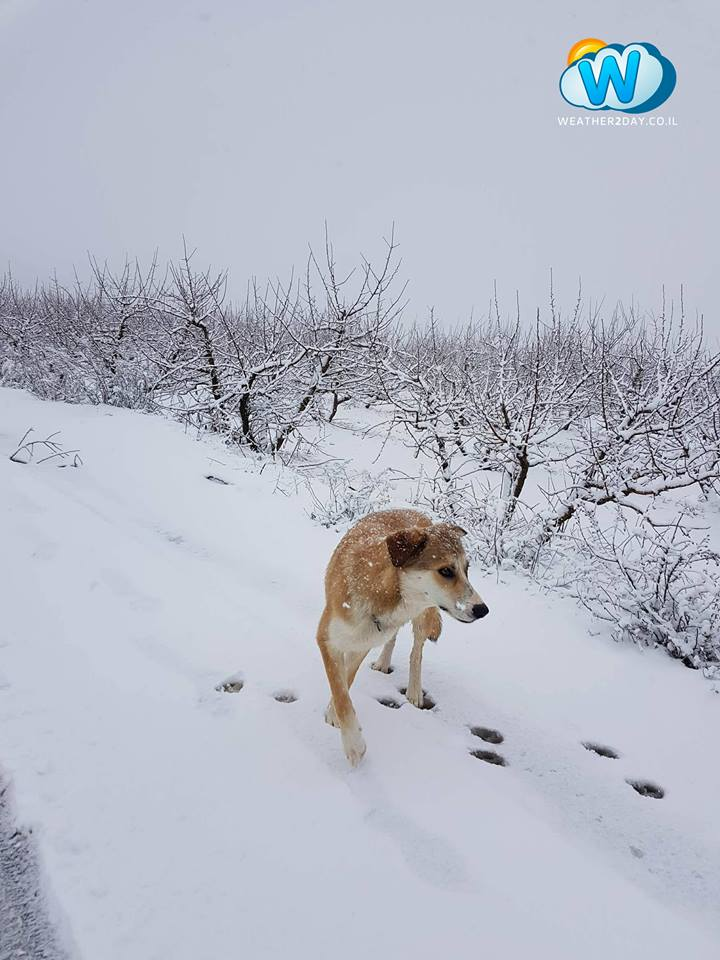 snow israel, snow israel picture, snow israel video, snow israel galilee, snow israel Golan heights